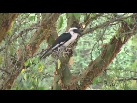 Birds & More: Tanzania Safari
