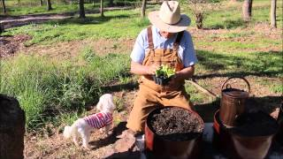 Tips and Ideas on How-to Plant Romaine Lettuce Transplants in Your Garden Containers