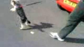 Yorkshire Terrier Walk