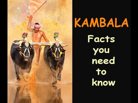 Kambala | The Facts you never know | Oldest Sport |Tulunadu | Karnataka