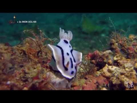 Diving with the SeaLife Micro 2.0 Pro 1500 | SeaLife Micro 2.0