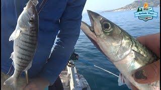 Güzelbahçe'de Balığı Bulduk. Çupra Hızlı, Çeşit Bol - 07 Şubat 2018