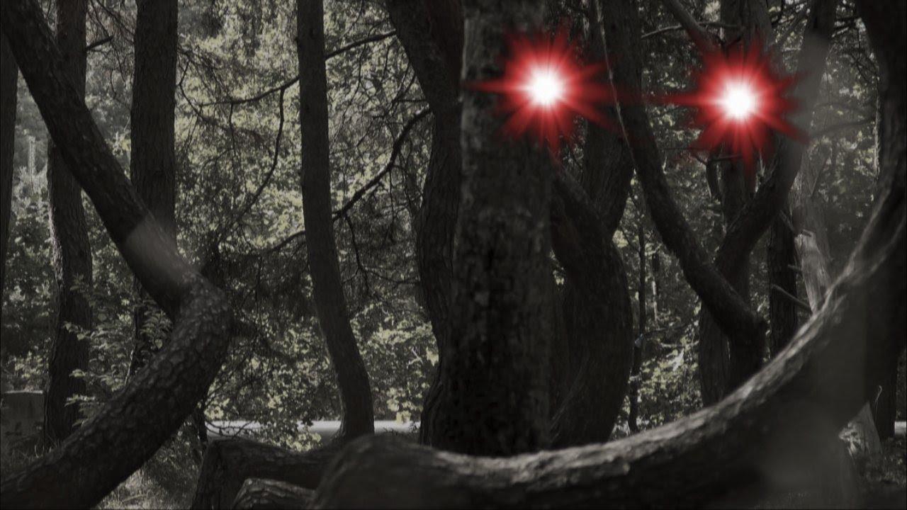 Hoia Baciu Wald
