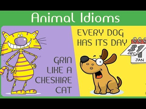 English Animal Idioms Grammar With Examples Youtube