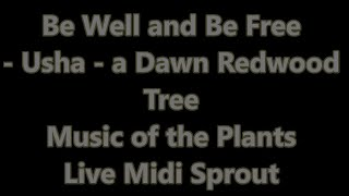 Be Well and Be Free by Usha Dawn Redwood Tree June 2020