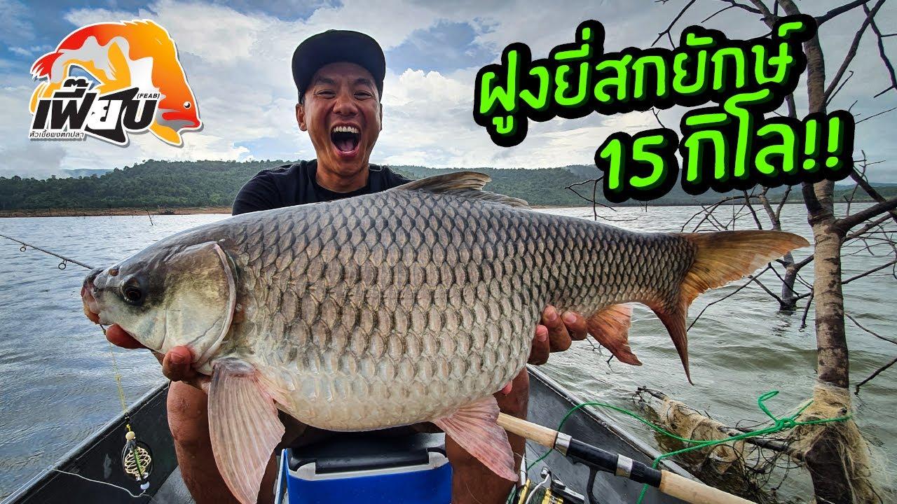 ฝูงยี่สกยักษ์ 15kg.! ตกปลาหน้าดินอ่างเก็บน้ำ! หัวเชื้อผงเฟี๊ยบ! Giant Rohu 15kg.