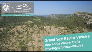 Une randonnée nature sur la montagne Sainte-Victoire