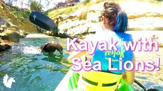 Kayaking with Sea Lions! (Jet DesertFox & Unicorn Leah San Diego Vacation - La Jolla Cove)