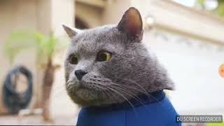 Кот мурзик. Коты с озвучкой не моё.