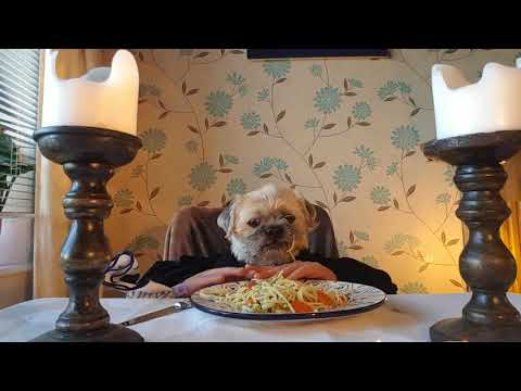 Dinner for one! - George the Hairy Pug!