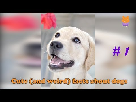 Cute Dog - Cute (and weird) facts about dogs #1
