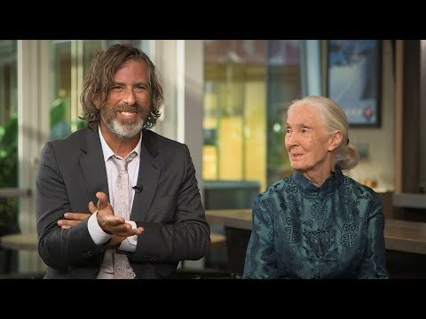 Jane Goodall on the 'Extraordinary Feeling' of Watching Documentary on Her Life for First Time