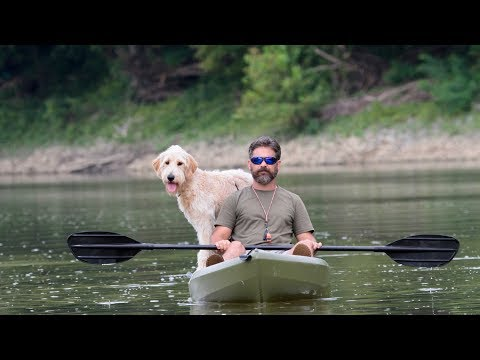 Professional Dog Training - Introducing Older Dogs to Swimming and Kayaking
