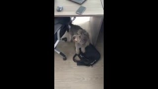 Dog doesn't like strange sound