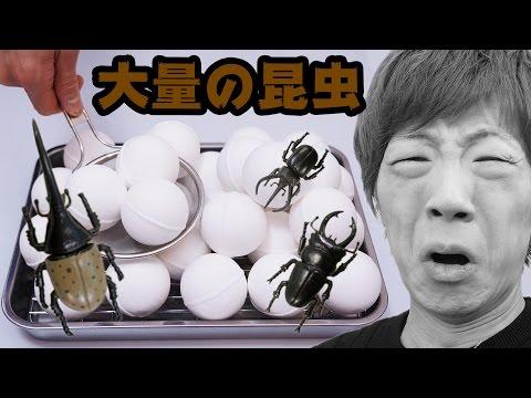 【閲覧注意】バスボール30個溶かしたら中から大量の昆虫?が出てきてグロすぎた。。。