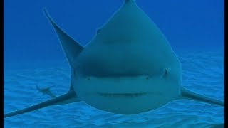 Diving with Dangerous Bull Sharks - Deadly 60 - Series 3 - BBC