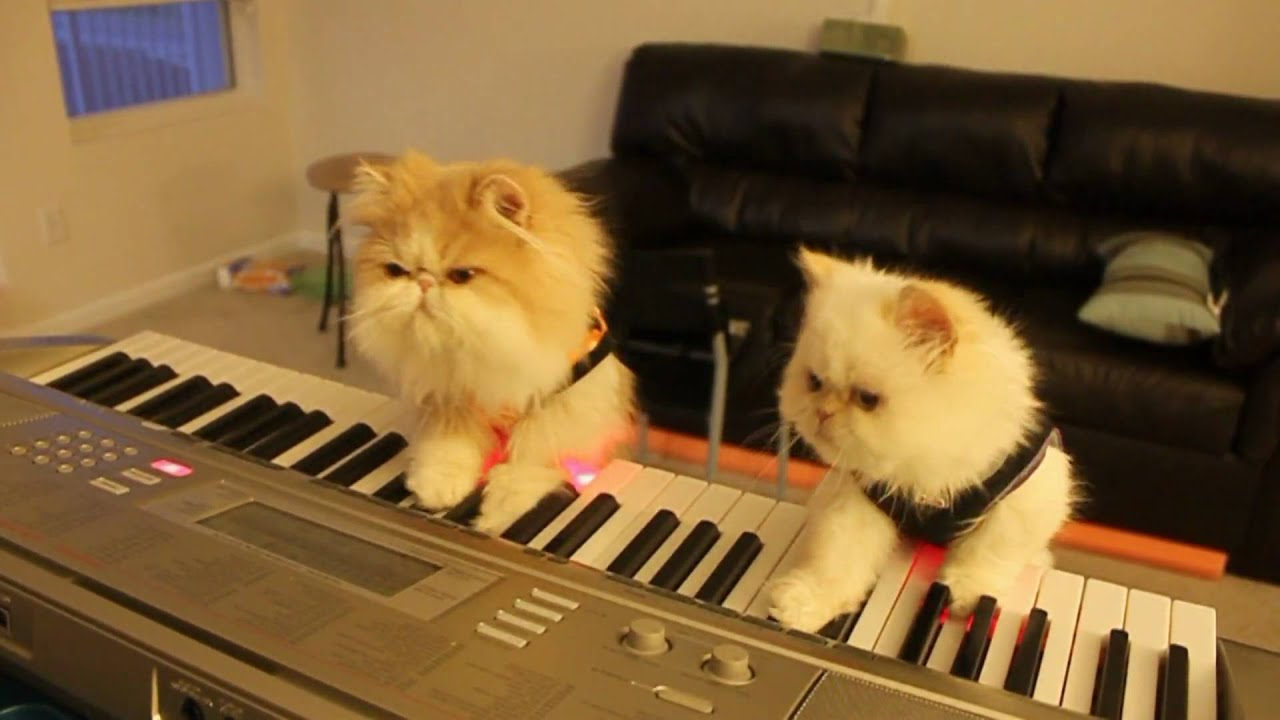 Kitten Duet: Spooky Halloween Music on Keyboard Piano ...
