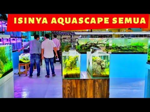 toko-aquascape-besar-dan-lengkap-jual-berbagai-varian-design-aquascape