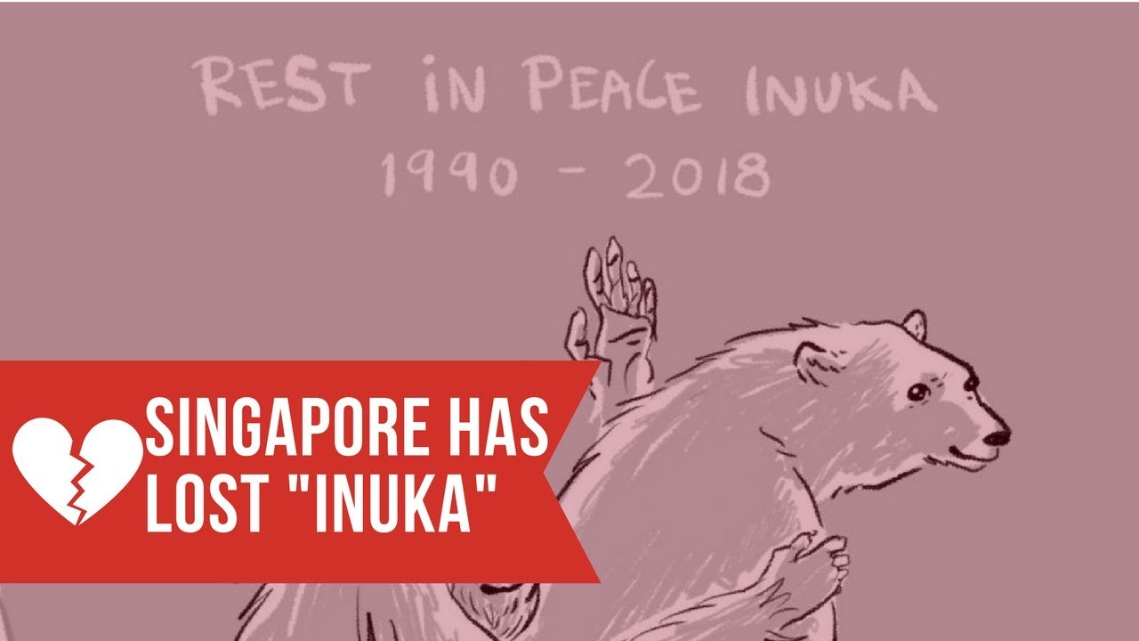 Farewell to Inuka - Singapore's most loved Polar Bear