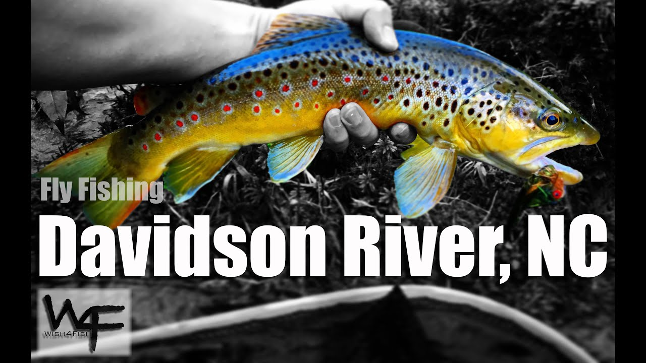 W4f fly fishing davidson river nc youtube for Davidson river fishing report
