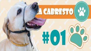 Coleira Cabresto -  Adestramor