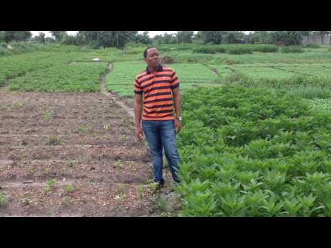 Vegetable farmers empowerment