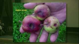 DE AGTC MÉK felvételi tájékoztatója 21. rész károsodások a gyümölcstermesztésben Thumbnail