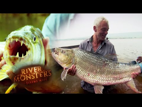 The Terrifying Tigerfish | TIGERFISH | River Monsters