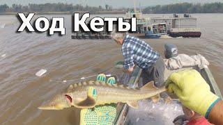 Путина кеты и рыбалка сплавными сетями на реке Амур Путешествие на север Хабаровского края