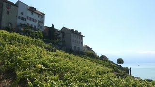 Easy to love but hard to find: Swiss Wine celebrated at Once-in-a-Generation festival   AFP
