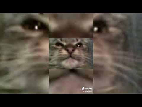 50 Cent - Candy Shop cover by Кіт Ти Маму Мав TikTok