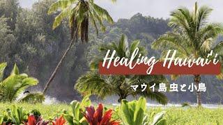 ハワイ州観光局 音で感じるハワイ〜マウイ島 虫と小鳥〜