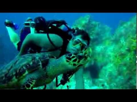 Swim With Hawksbill Turtle, Cozumel Mexico.