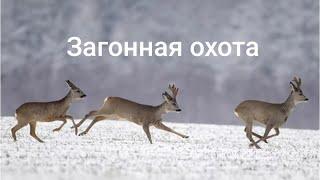 Закрытие сезона охоты на косулю 2020 год