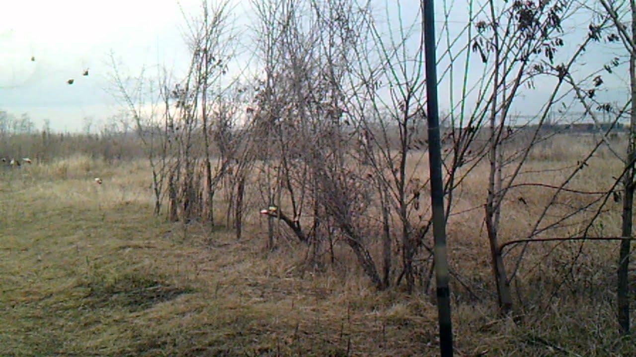 04-05.11.13 Ловля певчих птиц тайником, Днепропетровская обл .
