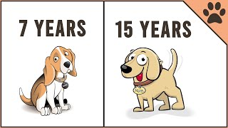 Most Crucial Mistakes That Shortens A Pets Lifespan