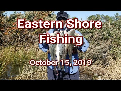 Eastern Shore Fishing 10-15-2019