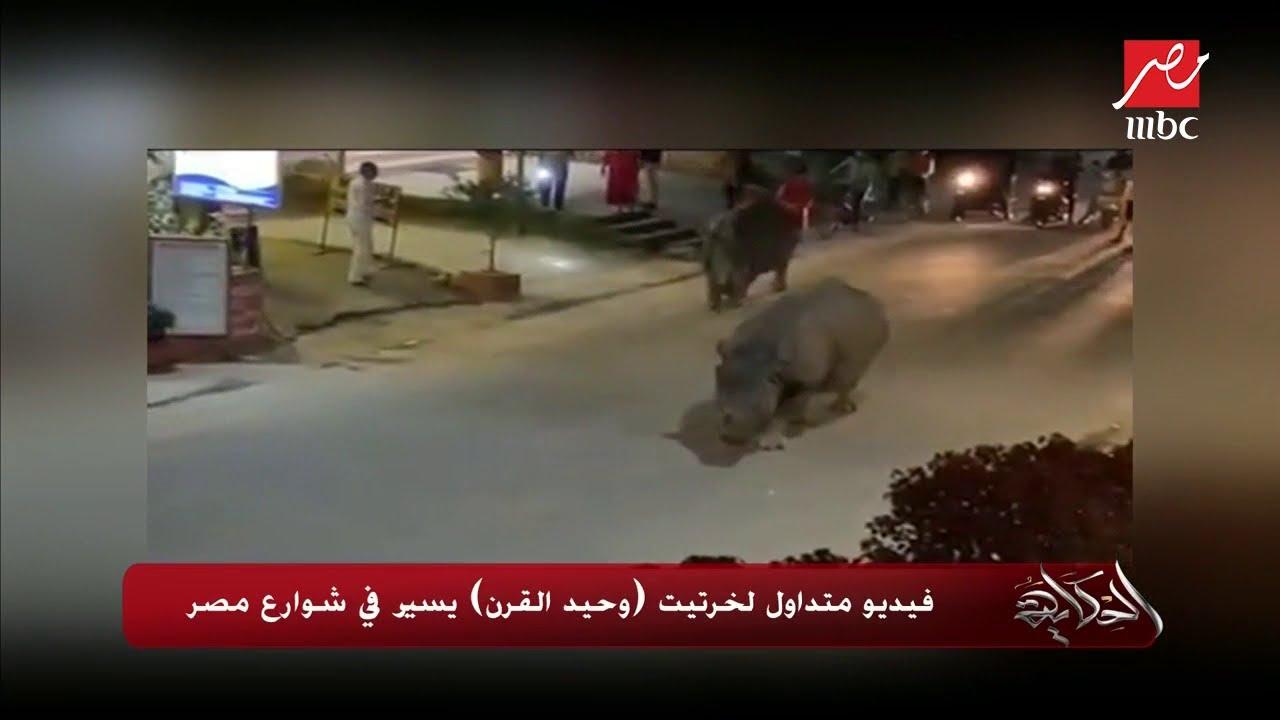 #الحكاية| حقيقة فيديو متداول لخرتيت (وحيد القرن) يسير في شوارع مصر