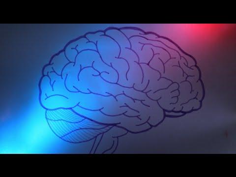 efectos del alcohol en el cerebro pdf