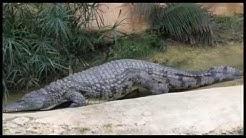 Visite à la ferme aux crocodiles à Pierrelatte (Drôme)