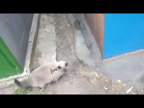 Что будет если домашнего кота вывести на улицу