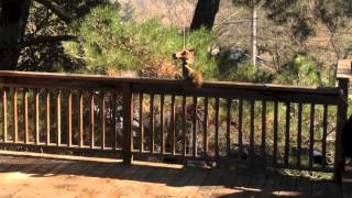 Squirrel Eats From Horse Head Feeder