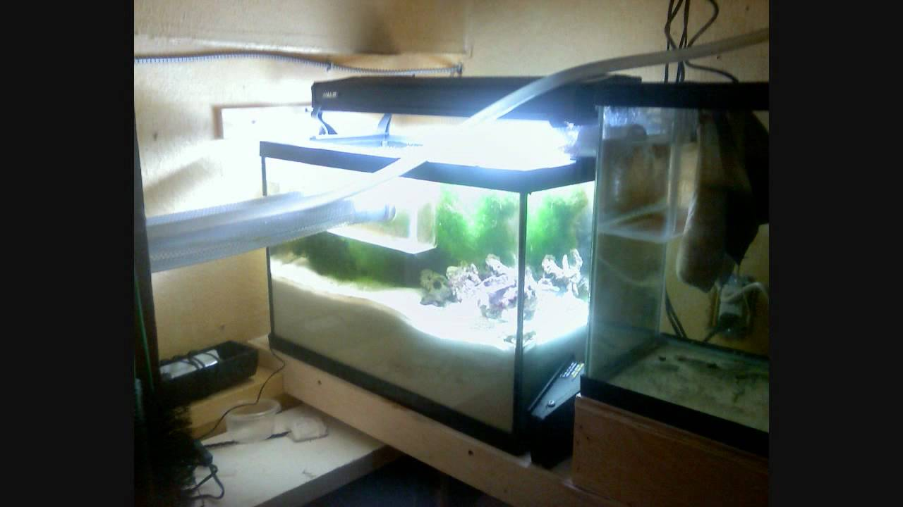 reef tank custom gravity sump refugium youtube