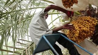 GORASIYA FARM CORPORATE VIDEO