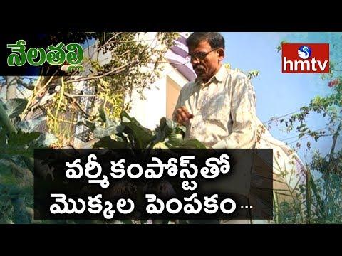 Organic Terrace Garden   Success Story Of Thummeti Raghotham Reddy    Nela Talli   hmtv