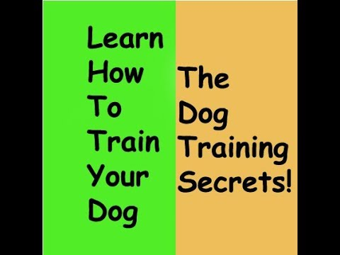 learn-about-the-dog-training-secrets---how-to-train-youre-puppy-[2019]