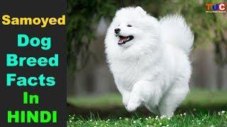 Samoyed Dog breed Facts In Hindi : Popular Dog Breeds : TUC