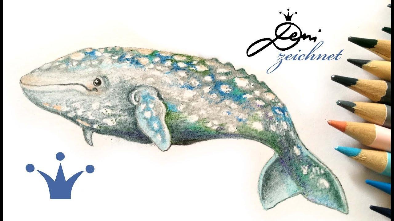 Grauwal zeichnen wal malen how to draw a gray whale - Comment dessiner une baleine ...