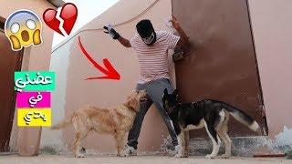مقلب سرقة الاستراحة في كلابي روكي ولوسي !! ماتوقعت بيهجمون علي 😱💔