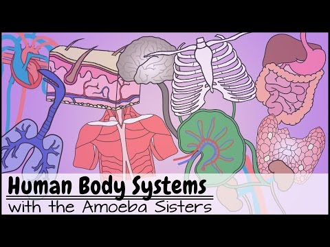 Human Body Systems Functions Overview: The 11 Champions (Upd